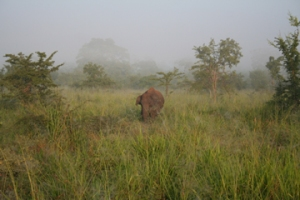 Elephant-in-the-mist