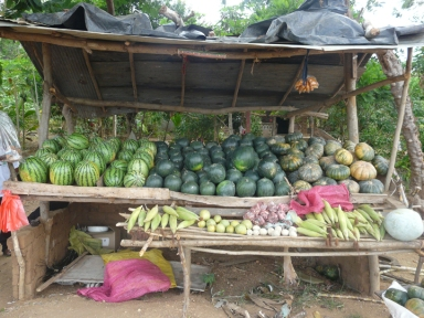 Some people sell fruits and vegetables on small roadside stands. This one has two kinds of watermelon, pumpkin, corn, and a few of the more native fruits.