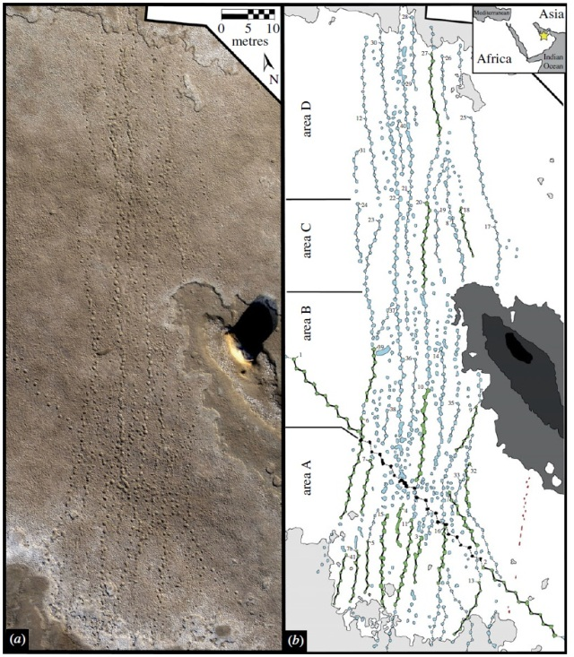 An aerial photo of the trackway (left) and a reconstruction of individual paths (right).