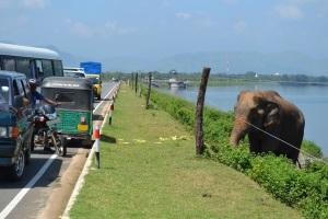 Rambo greets passing vehicles.
