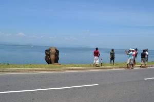 Hopeful elephant