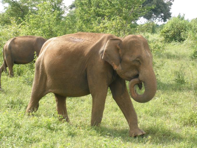 mickeyelephant