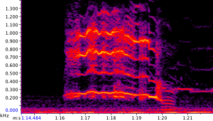 Spectrogram of Tushari's long-roar-rumble as she crossed back over the road