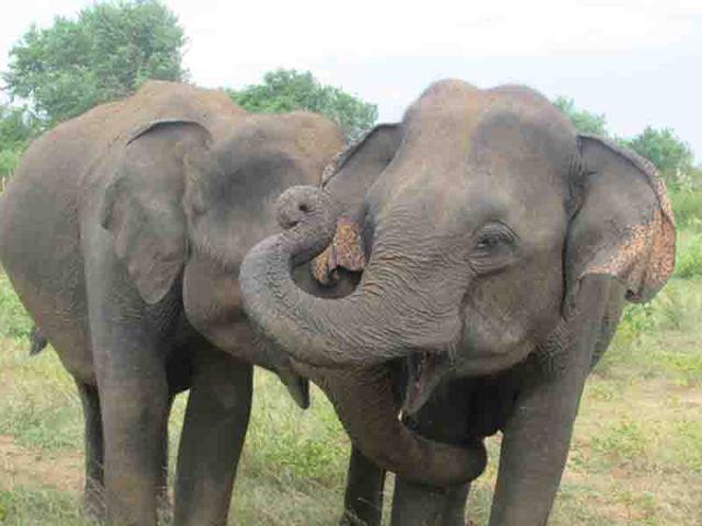 Mickey_elephants1