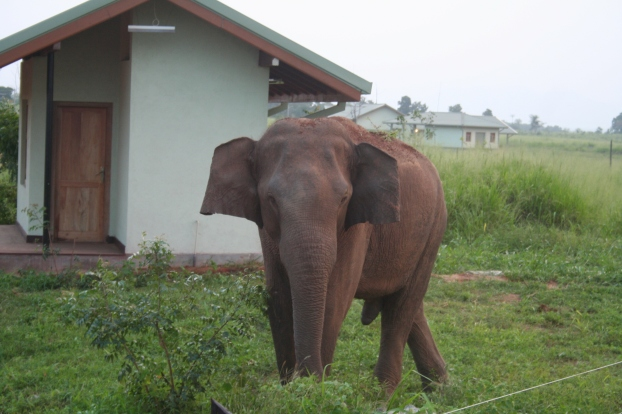 This elephant is on the wrong side of the fence at Uda Walawe National Park.