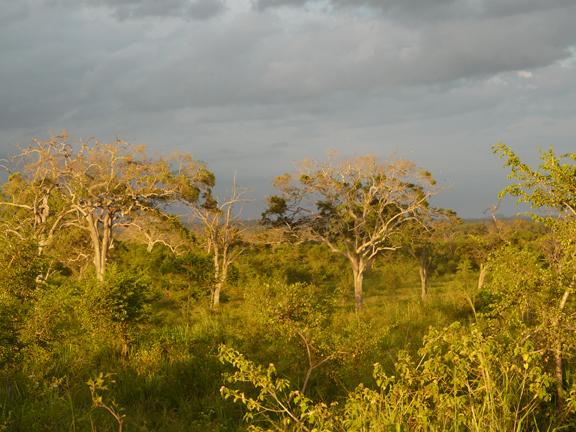 p1550668_vegetation_year2011