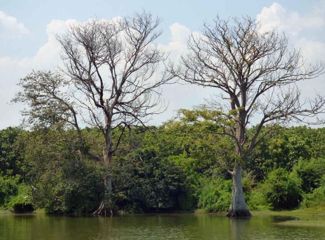 Elephant habitats in the area