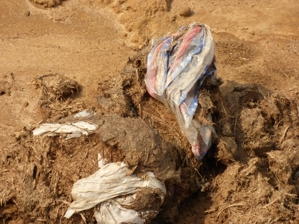 Plastic bags in elephant dung.