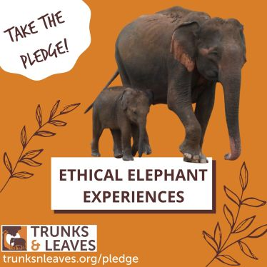 Mother and calf - ethical tourism