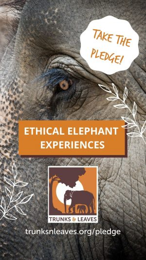 Ethical Elephant Experiences graphic 2 - Take the pledge.