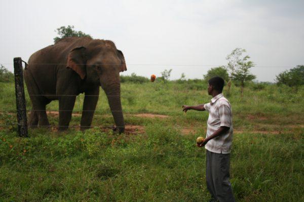 Do not feed wild elephants.